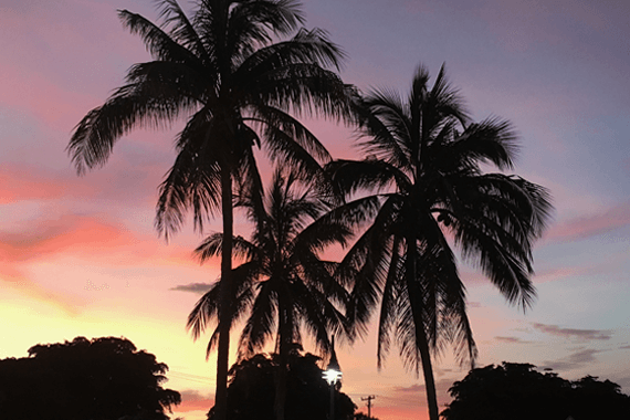 Sunset in Sarasota, pink and orange sky behind palm trees.