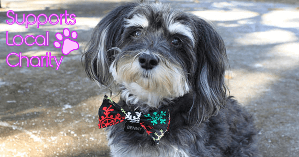Bow Tie Benny launches charity line for dogs