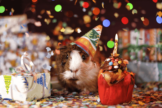Hamster sitting beneath Christmas tree, wearing party hat and presents.